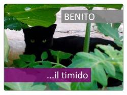 1 Benito