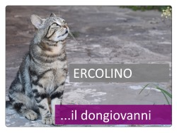 1 Ercolino